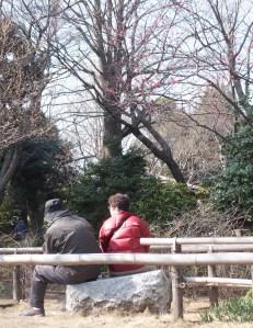 蘇峰公園の紅梅の下